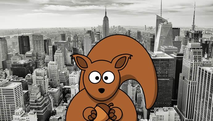 DAYDIVE   Eichhörnchen versucht Menschen zu verstehen